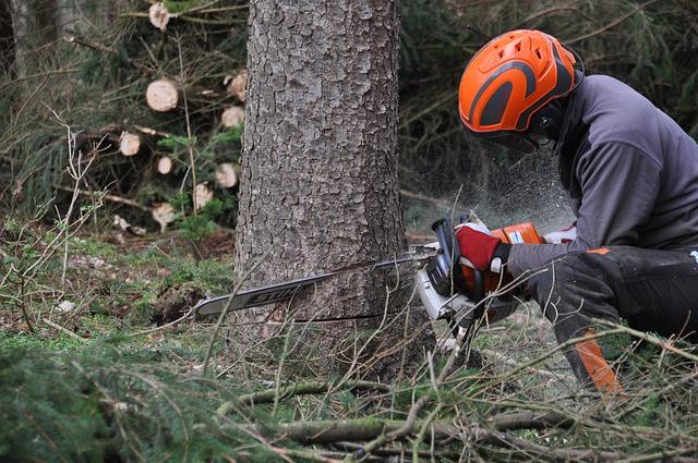 Zbavte se velkého stromu rychle, bez starostí a bez těžké techniky!