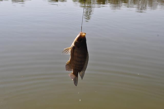 Podložka na ryby není jen módním trendem