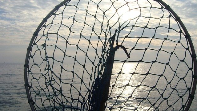 podběrák na ryby