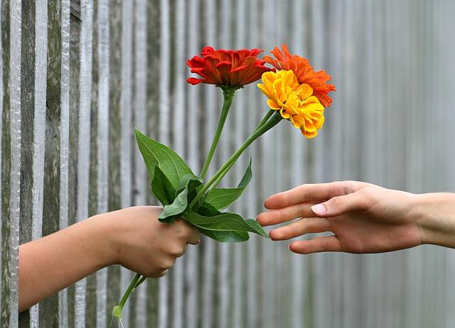 předávání trojbarevné kytice