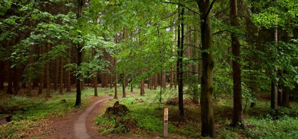 Jak funguje výkup lesních pozemků